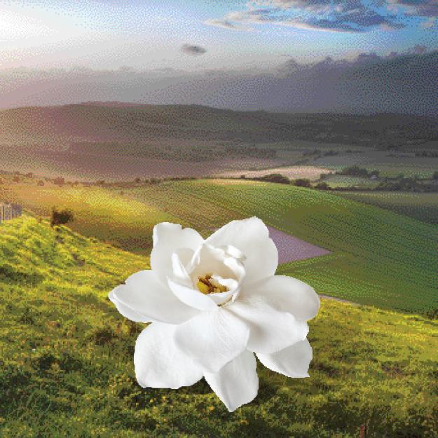 English Dawn Gardenia